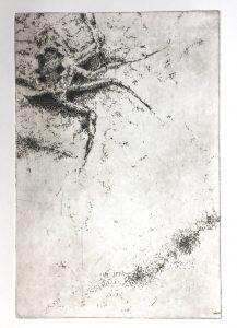 Krebs im Sand (20x30cm)